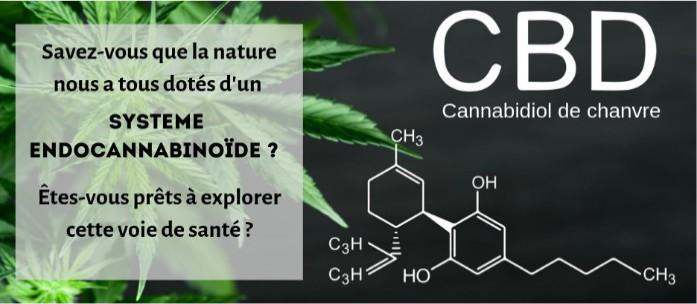cannabidiol-chanvre-cbd