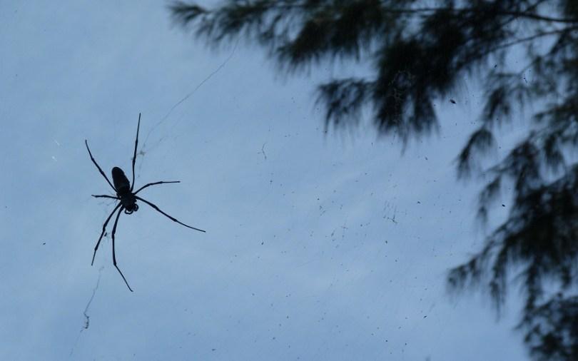 Les araignées du coin sont sympas