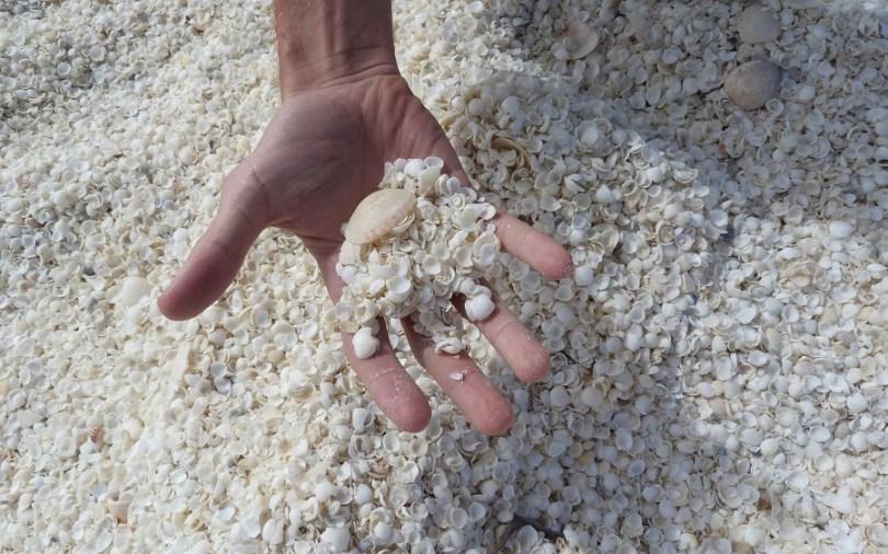 Shell Beach, la plage aux milliards de coquilles