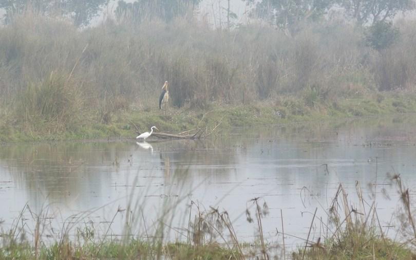 Chitwan marabout aigrette
