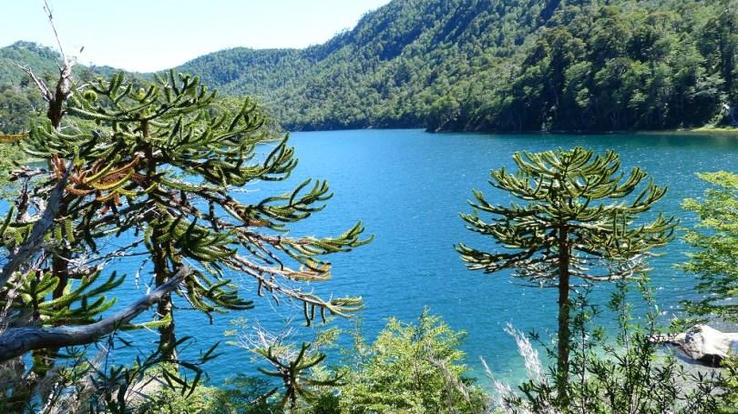 Lago verde huerquehue araucaria