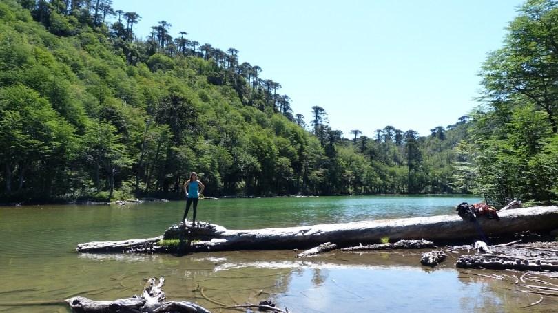 Parc national huerquehue pucon
