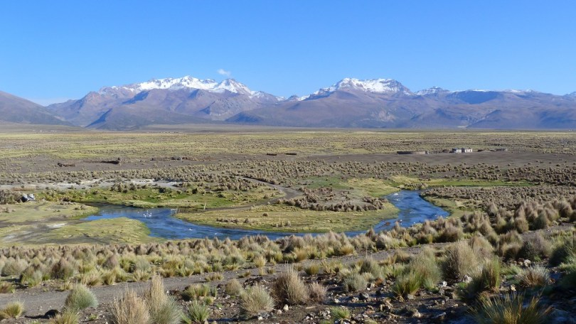 parc national sajama bolivie