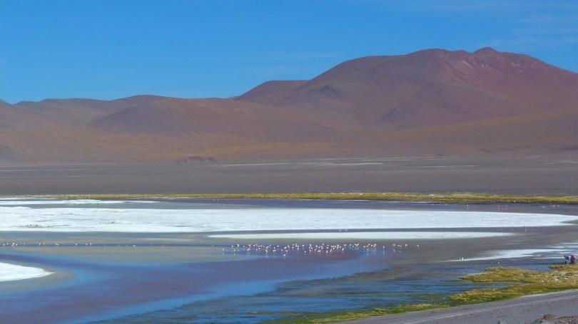 laguna colorada flamands