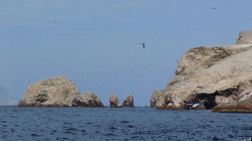 Nuage d'oiseaux islas ballestas