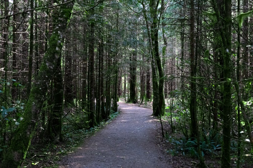 Ucluelet wild pacific rim reserve trail