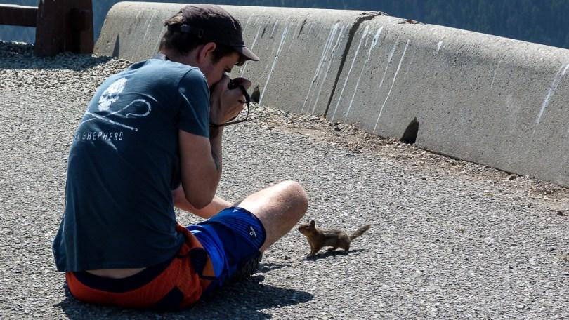 colombie britannique ecureuil