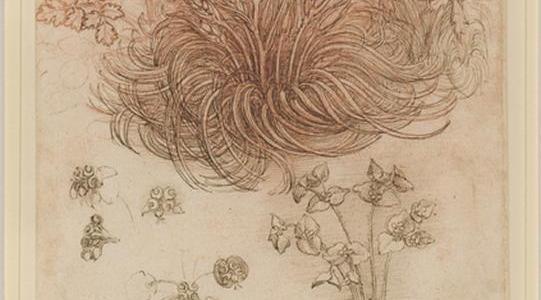 Estrela de Belém e outras plantas, Leonardo da Vinci