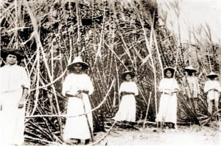 Trabalhadoras do corte da cana na Usina Brasileiro