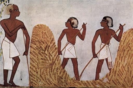 Dibujos que representan una escena de agricultura del cereal, hallada en la tumba de Menna