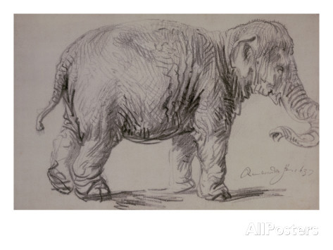 Imagen 7 - Elefante de Rembrandt