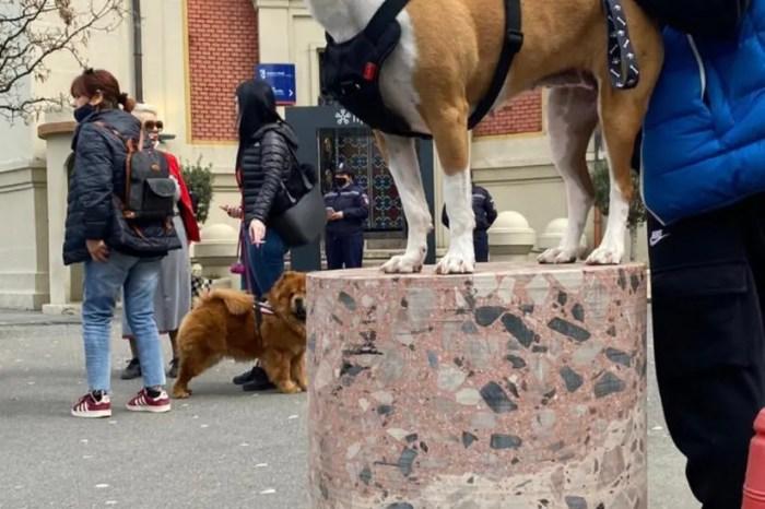 Protestë, mos vrisni qentë!