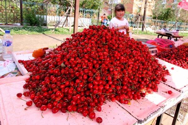 cerezas-china-1