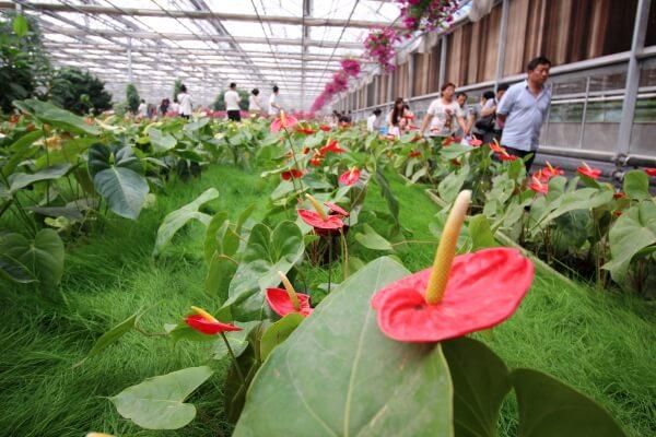 jardin-china-1