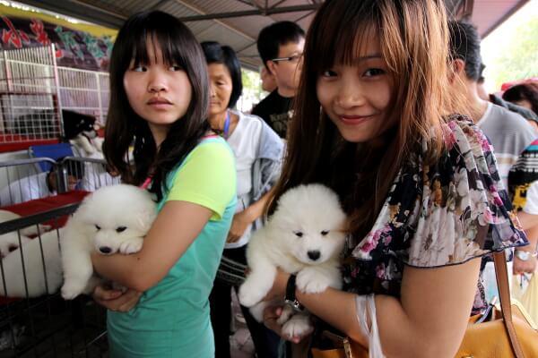 perritos-china-1