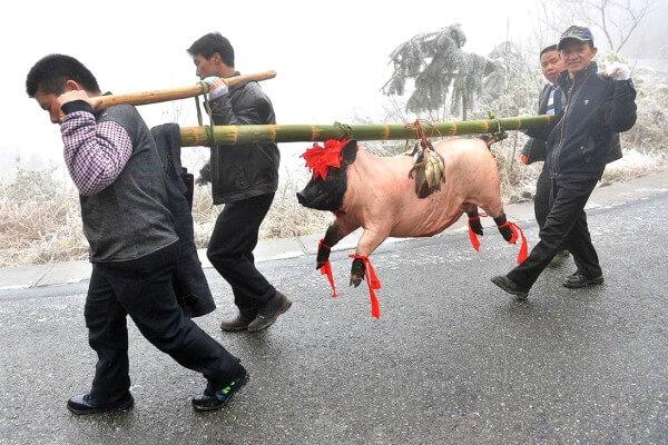 matanza-cerdo-china-2