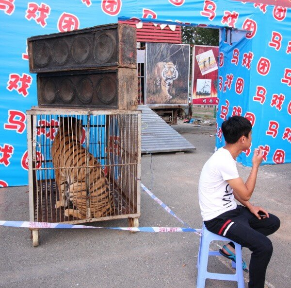tigre-festival-cerveza-china-1