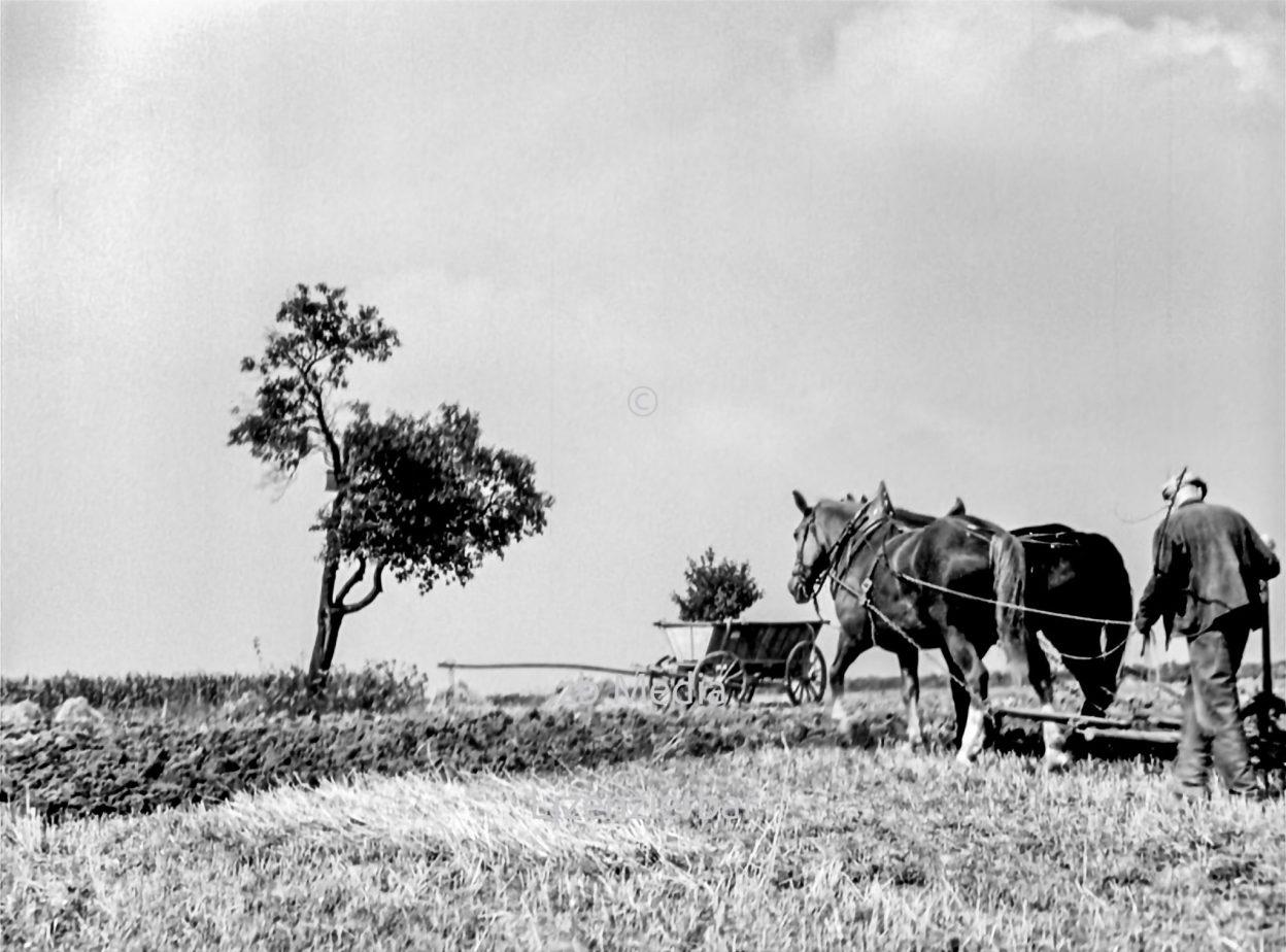 Pferdegespann mit Pflug in Deutschland 1937