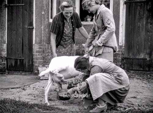NS Frauen helfen beim Melken 1937