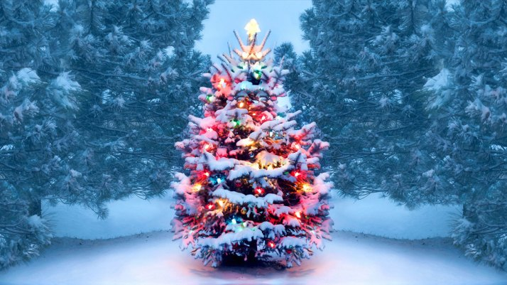 History of Christmas Trees - HISTORY