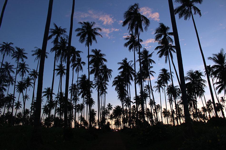 Koh Mak, l'île de Thaïlande aux 10000 cocotiers