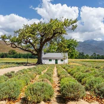 Visiter l'Afrique du Sud en voiture
