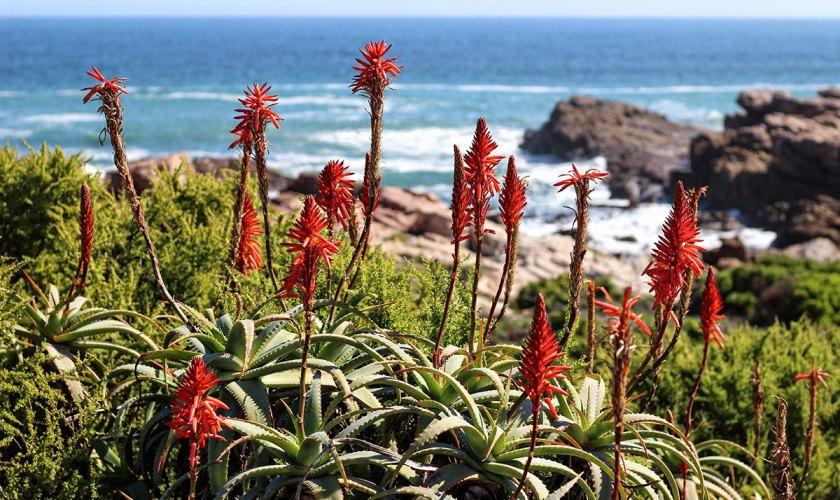 Road-trip sur la côte ouest sud-africaine