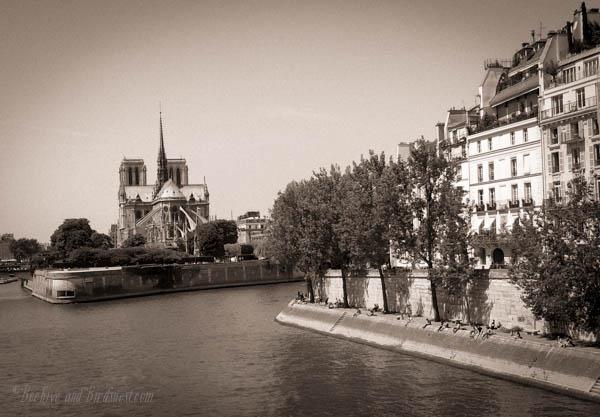Notre Dame light Sepia