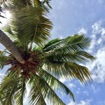 Palm Tree Nicaragua