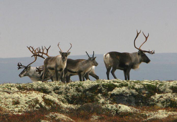 Lokalbefolkningen har eierskap til Hardangervidda