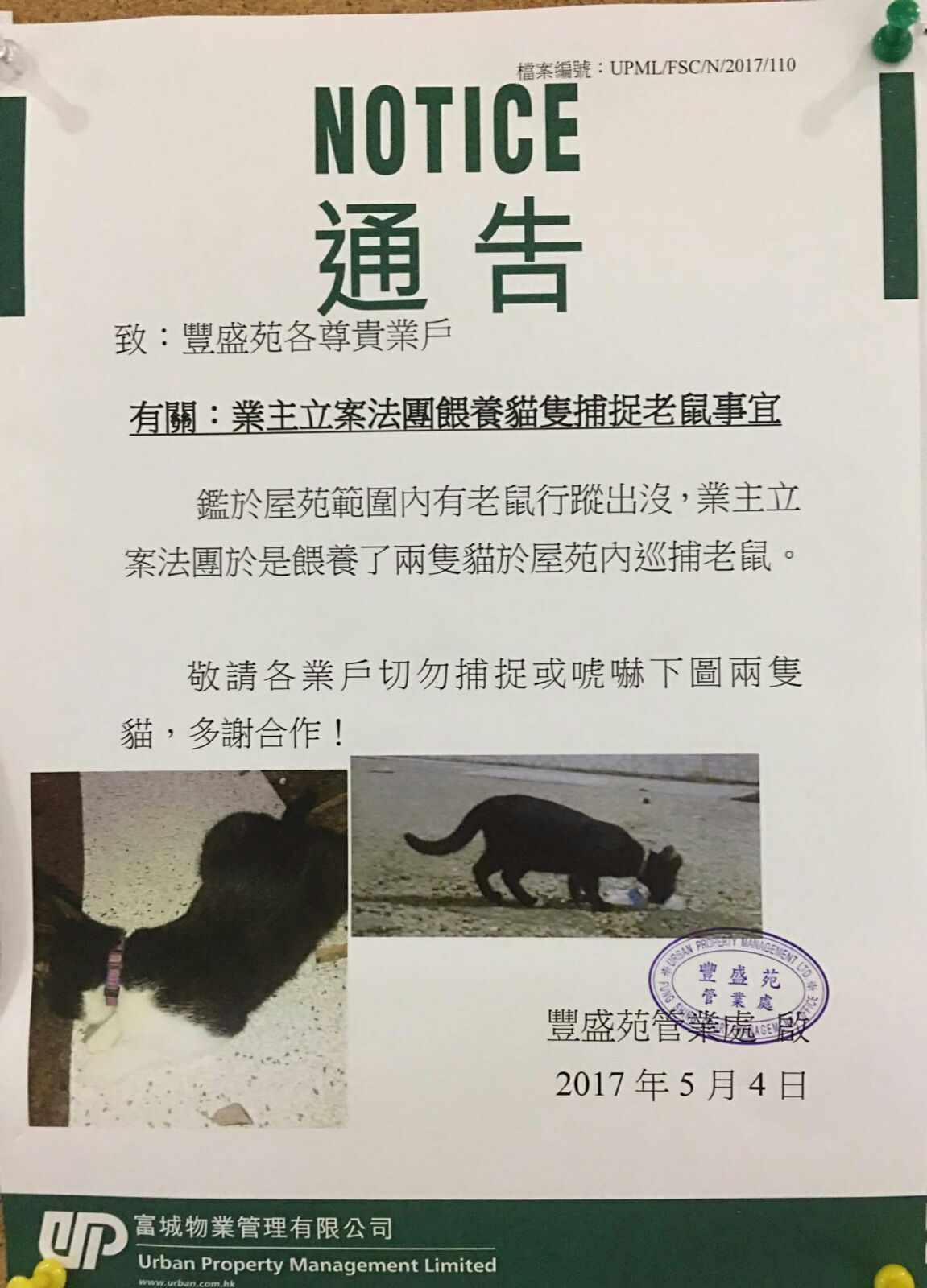 大圍豐盛苑養兩貓捉老鼠 區議員指養貓目的對動物欠尊重 | 香港動物報 Hong Kong Animal Post