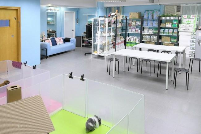 hkbunny.com 兔公館