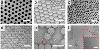 Figure 3 Bio-inspired design of liquid-repellent structures with enhanced mechanical stability. (a) Intact structure of interconnected porous surface. (b) Intact discrete structure. (c-d) Damaged interconnected structures at (c) 8.6 kPa (kilopascal, the unit of pressure) and (d)11.5 kPa respectively. (e-f) Damaged discrete structures at (e) 0.4 kPa and (f)2.9 kPa respectively.
