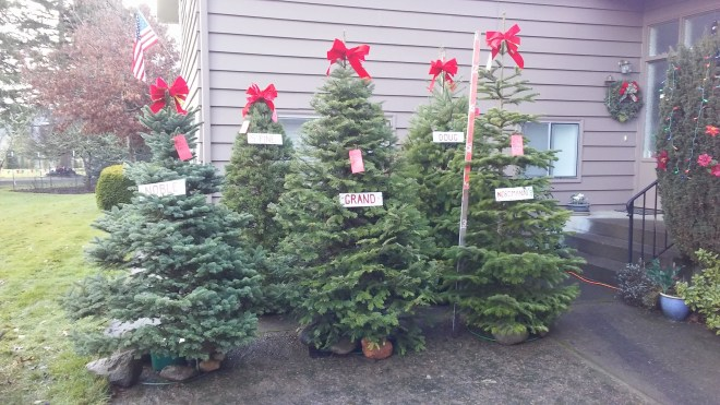 Display trees 2017