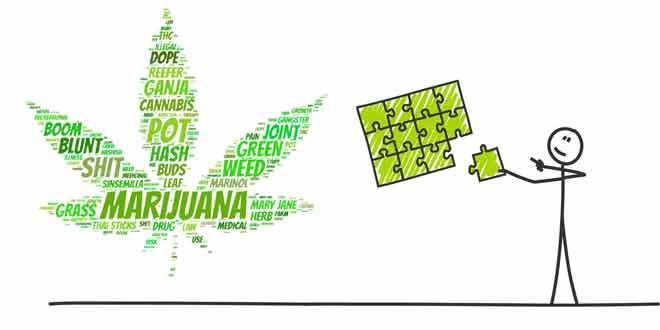 Marijuana and Mental Performance (2017 UPDATE) Tips and Tricks