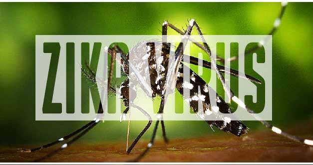 All You Need to Know about Zika Virus