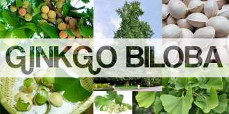 Ginkgo Biloba Benefits, Uses and Side Effects 2016 Guide