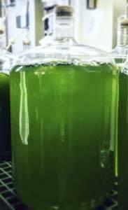 microalgae_probiotics_183x300