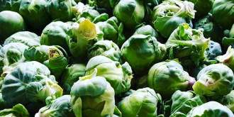 Brussels Sprouts: Fun Facts and Health Benefits