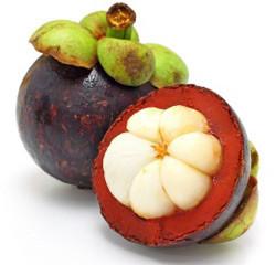 garcinia-cambogia-fruit-250x240