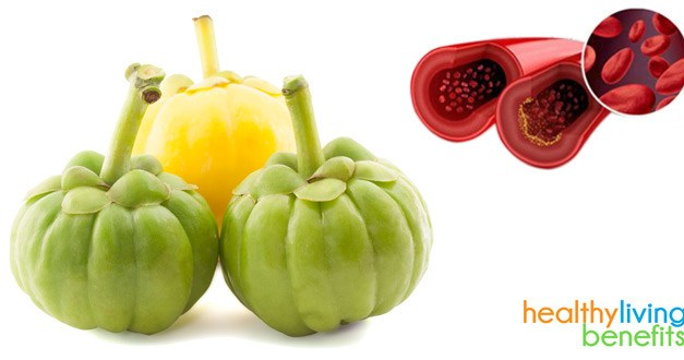 Garcinia Cambogia HCA Extract for Weight Loss