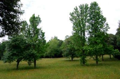 Landscape Restoration in Progress Photo, Click for full size