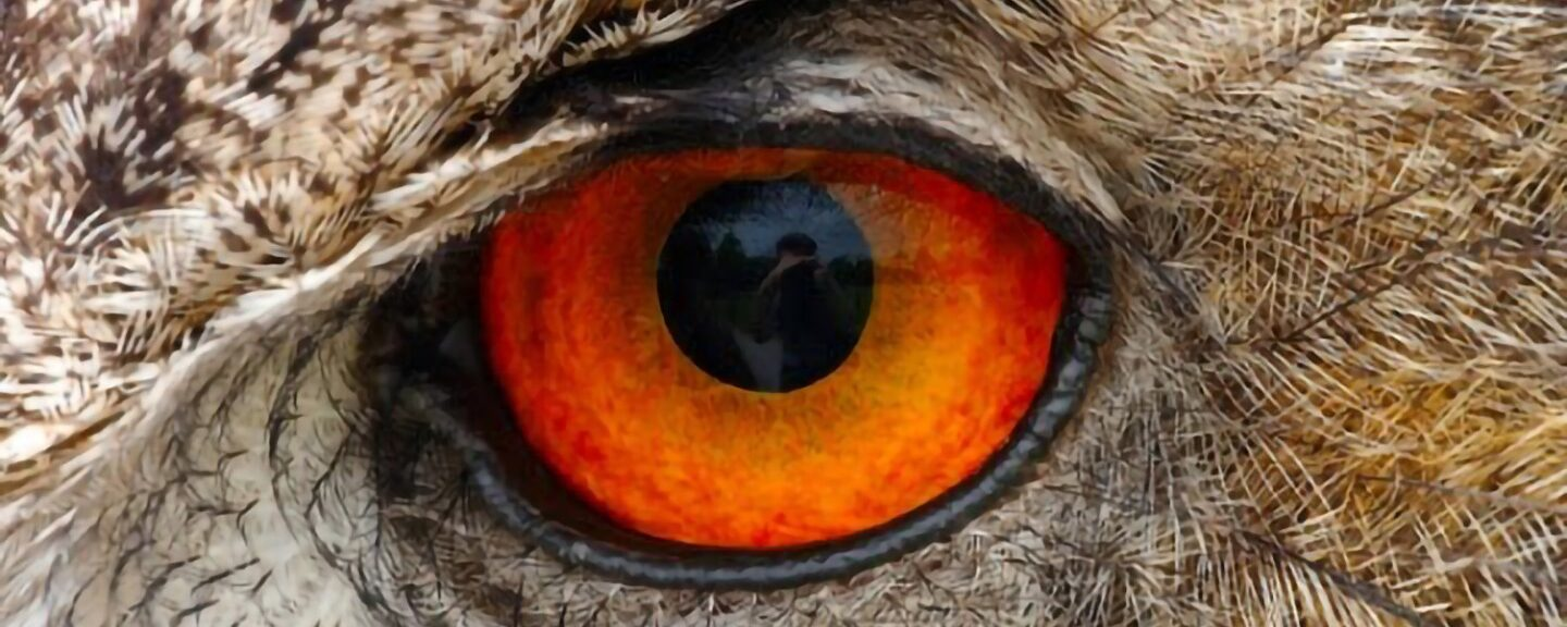 Native American (Iroquois) Folklore – Why the Owl Has Big Eyes