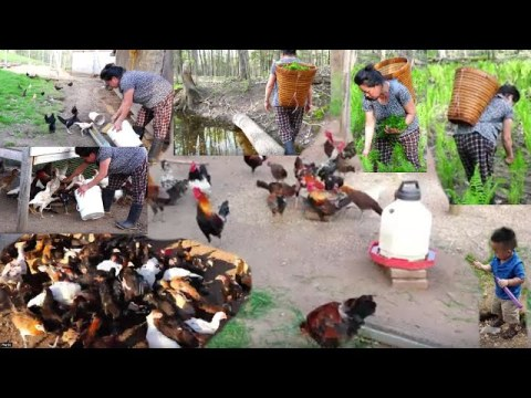 Hmong Northern America How my family Make A Living And Lifestyle