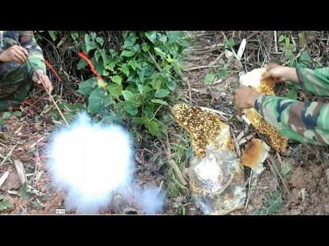 Amazing Honey Bee Live underground / how to make hmong style