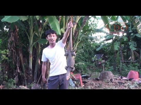 Natural life Bao Hmong eating a lizard/Tub Hmoob Noj nab qa/ບ່າວມົ້ງກິນໂຕແລນ/บ่าวม้งกีนตัวแลน