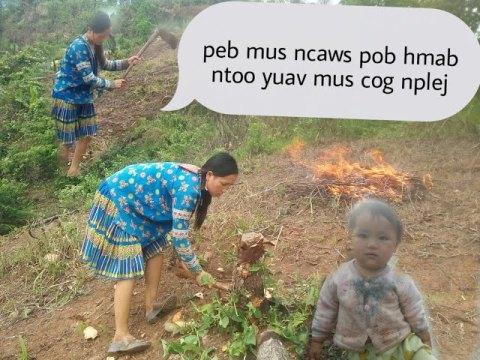Hmong mus ncaws pob hmab pob ntoos yuav cog nplej