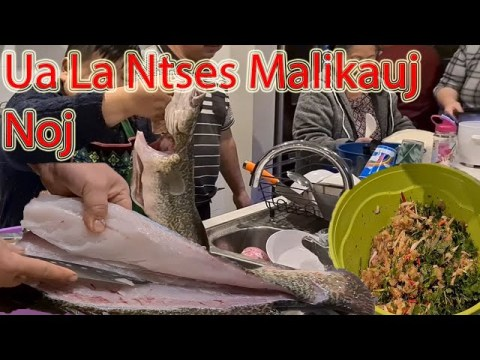 Hmong Australia Ua La Ntses Malikauj Noj