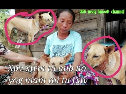 Xov xwm tshiab ntawm tu niam tai thiab tu aub no -  hmong sad story love 9 8 2020