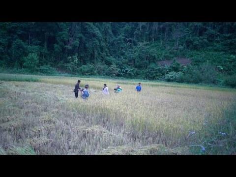 Hmong Life In Viet Nam「November 4, 2020」